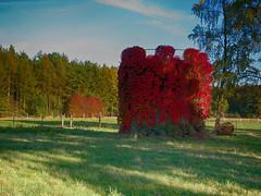 Beautified (BeMo52) Tags: biogas flora forest indiansummer landscape natur nature partofabiogasplant pasture wald weide seasonsflora smileonsuturday myhomeismycastle lumixgmacro30mm28asphois