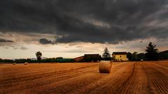 The golden field (Enrico Cusinatti) Tags: albero alberi clouds cielo cloud enricocusinatti fieno italy italia landscape nuvole piemonte sky sunset travel tramonto vegetazione vacation farm fattoria