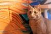 Javacats14Oct2018323.jpg
