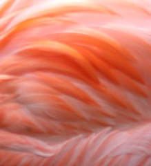 IMG_4280 (dennis gray) Tags: animals birds maryland places states zoo flamingos