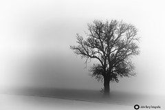 Morning fog (john_berg5) Tags: morning tree baum monocrome bw fog nebel minimalismus nature landscape