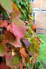 Autumn Leaves, Aston Park. (Manoo Mistry) Tags: aston astonpark astonhall parks openspace trees leaves autumn autumncolours autumnleaves nikon nikond5500 tamron tamron18270mmzoomlens