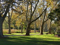 sit a spell (natureburbs) Tags: newjerseynature autumn october dukefarms trees bench
