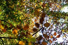 Herbst (wpt1967) Tags: blatt blätter canon50mmcompactmacro castroprauxel eos6d friedhof herbst ruhrgebiet ruhrpott waldfriedhofrauxel autumn fall graveyard leaf wpt1967