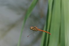 (Kaska Ppp) Tags: macro macrophotography macromonday macromondays animals animal insect wildlife water nature naturephotography natur