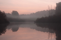 Misty morning (decemberGirl.) Tags: morning dawn lake mist misty trees reflection water surface nature 50mm serene