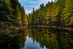 Big Spring (Epperly Photographic Images) Tags: michigan spring nature autumn fall trees woods water clear reflections nikon d800e