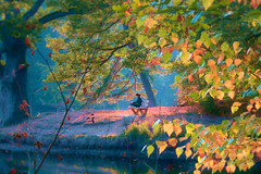 magical after work hours (Wackelaugen) Tags: autumn lake light foliage leaves bärensee neuersee pfaffensee stuttgart afterwork color colors person canon eos photo photography stephan wackelaugen