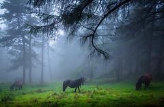 irukote 1 (juan luis olaeta) Tags: paisajes landscape basoa forest bosque nieblas fog laiñoa canoneos60d