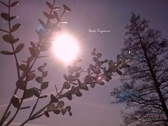 Sunset (sarkacuperova) Tags: krajina