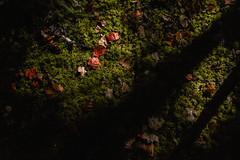 winterriveroct18-306-9 (carrieellengregory) Tags: 2018 autumn carriegregoryphotography fall october pei winterriver
