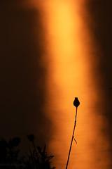 dans le reflet (Mireille Muggianu) Tags: bouchesdurhone cassis europe france provencealpescotedazur coucherdesoleil mer minimal paysage sunset samsungnx nx500