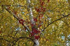 Золотая осень. (Angelok-Happy) Tags: золотаяосень сентябрь лес природа краски палитра