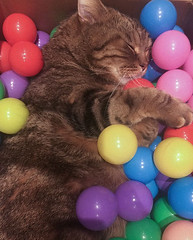 (ladydinahscatemporium) Tags: wookie ballpit