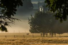 Parklife pt2 (frattonparker) Tags: btonner lightroom6 nikond810 tamron28300mm win10 frattonparker fence fog mist trees sheep sun park contrejour