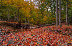 Buck Branch Runs Dry (Dan at ProPeak - Thanks for over 1.1M views!) Tags: america autumn autumncolor buckbranch deadtree forest green landscape leaf leaves maryland nature northamerica orange potomac red rocks roots rural stream trees usa unitedstates water yellow