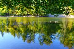 tree skeleton (skp-mm) Tags: grün naturephotography wald see baum bärensee wasser holz park heiter