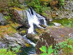 The falls in fall (walneylad) Tags: capilanoriverregionalpark northvancouver westvancouver britishcolumbia canada capilanoriver canyon park parkland urbanpark forest rainforest urbanforest woods woodland evergreen trees branches leaves log stump ferns rocks water river trail path falls waterfalls green brown yellow white september autumn fall afternoon view nature scenery