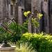 Compton Castle garden