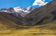 Palette of Altiplano / Палитра Альтиплано (Vladimir Zhdanov) Tags: travel peru andes mountains mountainside landscape nature sky cloud grass altiplano snow