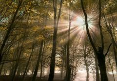 argia bapatean 1 (juan luis olaeta) Tags: landscape paisajes forest basoa bosque contraluz argia pagoa natura naturaleza fujifilmxpro1 fog foggy nieblas laiñoa