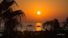 Sonnenuntergang unter Palmen. (cornelia_auguste) Tags: abendstimmung abendstunde abendlicht abenddämmerung abendhimmel abendsonne corneliaauguste colour dämmerung einzigartigkeit farbenspiel farben farbenrausch gegenlicht himmel himmelsstimmung himmelsfarben lichtstimmung light moment meer nature outdoor orange palmen schiffe skyline sonnenuntergang sunset sky spiegelung sonne sun träume ufer wasser wolkenstimmung water
