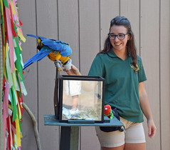 For a Job Well Done (MTSOfan) Tags: fundraising macaw blueandgoldmacaw epz bird dollar azul haley