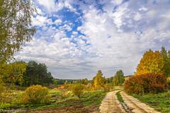 Autumn in Moscow / Московская осень (Vladimir Zhdanov) Tags: autumn october nature landscape russia moscow sky cloud park forest tree field grass road