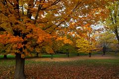 Walk in the Park (Brian Behling) Tags: greendale whitnallpark fallcolors autumn