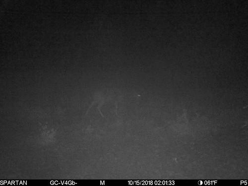 2018-10-15 02:01:33 - Crystal Creek 1