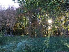 (genekorol) Tags: flowers autumn grass frost forest sunrise