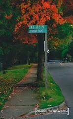 Colors on Our Street - 2 (oterrason) Tags: street neighborhood sidewalk autumn fall season colors leaves nature trees grass foliage fuji fujifilm fujifilmxpro2 xpro2 fujinon xf80mmf28 xf80mmf28r xf80mmf28rlmois velvia