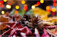 Magic of Autumn (Heathcliffe2) Tags: autumn magic season winter colour fall pine cones pinecones christmas lights light fairy colours dark forest leaves leafwood macro