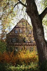 Tudor - Fachwerk (Sue Elderberry) Tags: fall autumn herbst leaves foliage tree house tudor light sunshine