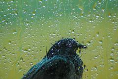Rainy Day (erengun3) Tags: sony sonyalpha a77 birds rainy rain storm