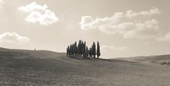 Tuscany (FlavioSarescia) Tags: italien landscape toskana italia italy nature landschaft summer sun sepia blackandwhite blackwhite travel trees tree field hss