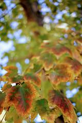Leaves in Red and Green (matthileo) Tags: 500px shrub botanical garden fruit tree lush spring phalaenopsis blooming fall autumn leaf leaves light plants flickr facebook katzmatt tumblr