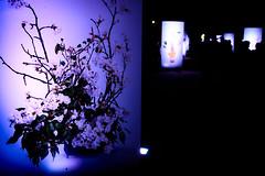 山口ゆめ花博-19市町の花通り #1ーYamaguchi Yume Flower Expo- Flower Street of 19 Cities and Towns #1 (kurumaebi) Tags: yamaguchi 阿知須 山口市 nikon d750 山口ゆめ花博 夜 night yamaguchiyumeflowerexpo