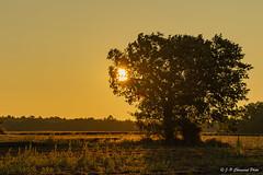 Soleil levant - Sunrise ...
