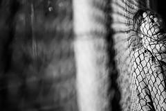 About fence stories (Black&Light Streetphotographie) Tags: monochrome mono menschen menschenbilder people personen portrait urban tiefenschärfe wow dof depthoffield fullframe face friends freunde gesicht nahaufnahme city closeup vollformat sony streetshots streets streetshooting sonya7rii blackandwhite bw blackwhite bokeh bokehlicious blur blurring