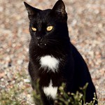 La condesa Catula ♀️#panteras #gatos #gatoscallejeros #cats #photocats #instacats #neko #meow #gatze #gatto #koshka #catsofworld #catsofinstagram #streetcats #chat #blackcat #gatonegro #barcelonagatigos #gatosdeinstagram #vampiro #colmillos #dracula thumbnail