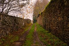 corredoira (mercedescasal) Tags: riverasacra otoño rio corredora camino path autumn piedra galicia
