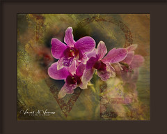Loving Cluster (Visions by Vincent) Tags: flowers florida fantasticnature frame topaz texture selbygardens floralart