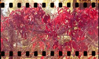 Autumn on fence
