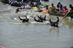Festival de 5 Gaso - Lac de Barreau - Fêtes Votive saint Rémy de Provence (salva1745) Tags: festival de 5 gaso lac barreau fêtes votive saint rémy provence