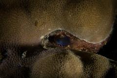 IMG_7110 (Gil Xavier) Tags: underwater scuba philippines canon fantasea g7xmk2 cebu moalbal turtlebay