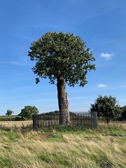 IMG_0471 (dm087) Tags: boscobelhouse farmhouse charlesii englishcivilwar theroyaloak kinginatree