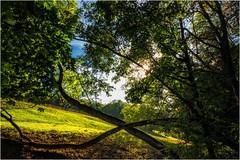 Holzkreuz (linke64) Tags: thüringen deutschland germany grün bäume wald wiese himmel kreuz holz gegenlicht