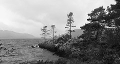 by the moody shores of Loch Awe (lunaryuna) Tags: scotland westcoast lochawe lake landscape fall autumn herbst otono monochrome bw blackwhite mood weather changeofseason seasonalwonders lunaryuna