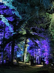 2018 - 4.10.18 Enchanted Forest (115) (marie137) Tags: forest lights trees show marie137 bright colourful pitlochry treeman attraction visit entertainment music outdoors sculptures wicker food drink family people water animation